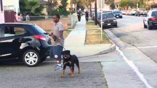 Американская полиция застрелила собаку!!!
