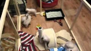 Funny kittens / Забавные котята