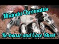 Nhandu Chromatus re-house and care sheet.