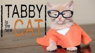 Orange is the New Black (Cute Kitten Parody): PET COLLECTIVE