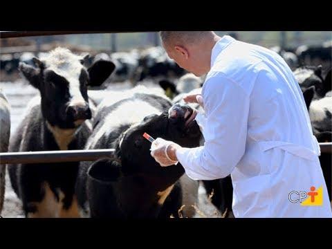 Clique e veja o vídeo Curso a Distância Enquanto o Veterinário Não Chega - Atendimento a Bovinos