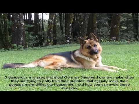 german-shepherd-puppy-training-not-to-bite-video
