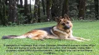 German Shepherd Puppy Training Not To Bite Video