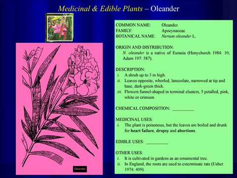 Medicinal And Edible Plants Used By East Indians Of Trinidad And