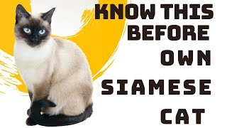 Siamese Cat Breed Portrait  What You NEED to Know Before Owning!!