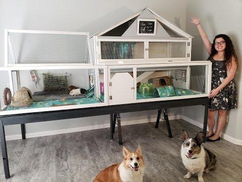46 SQFT GIANT DIY Guinea Pig Cage Tour