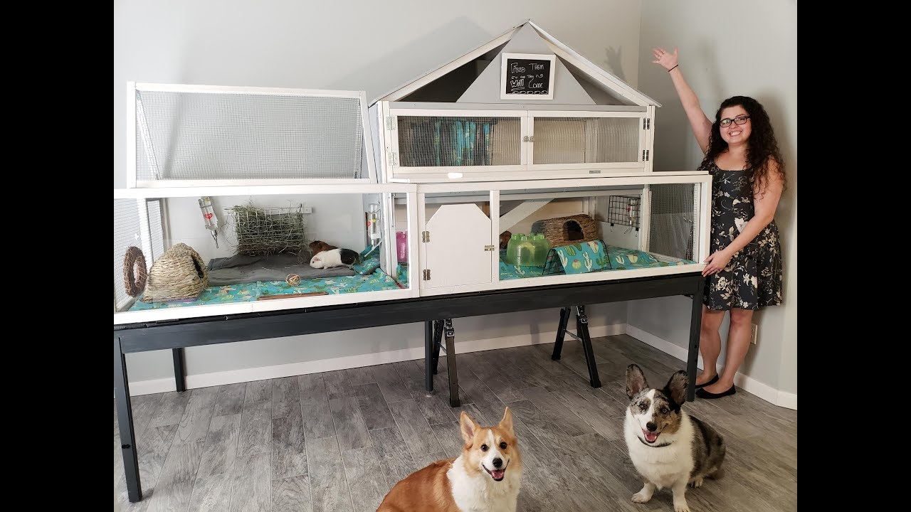 Biggest House Ever >> 46 SQFT GIANT DIY Guinea Pig Cage Tour - YouTube