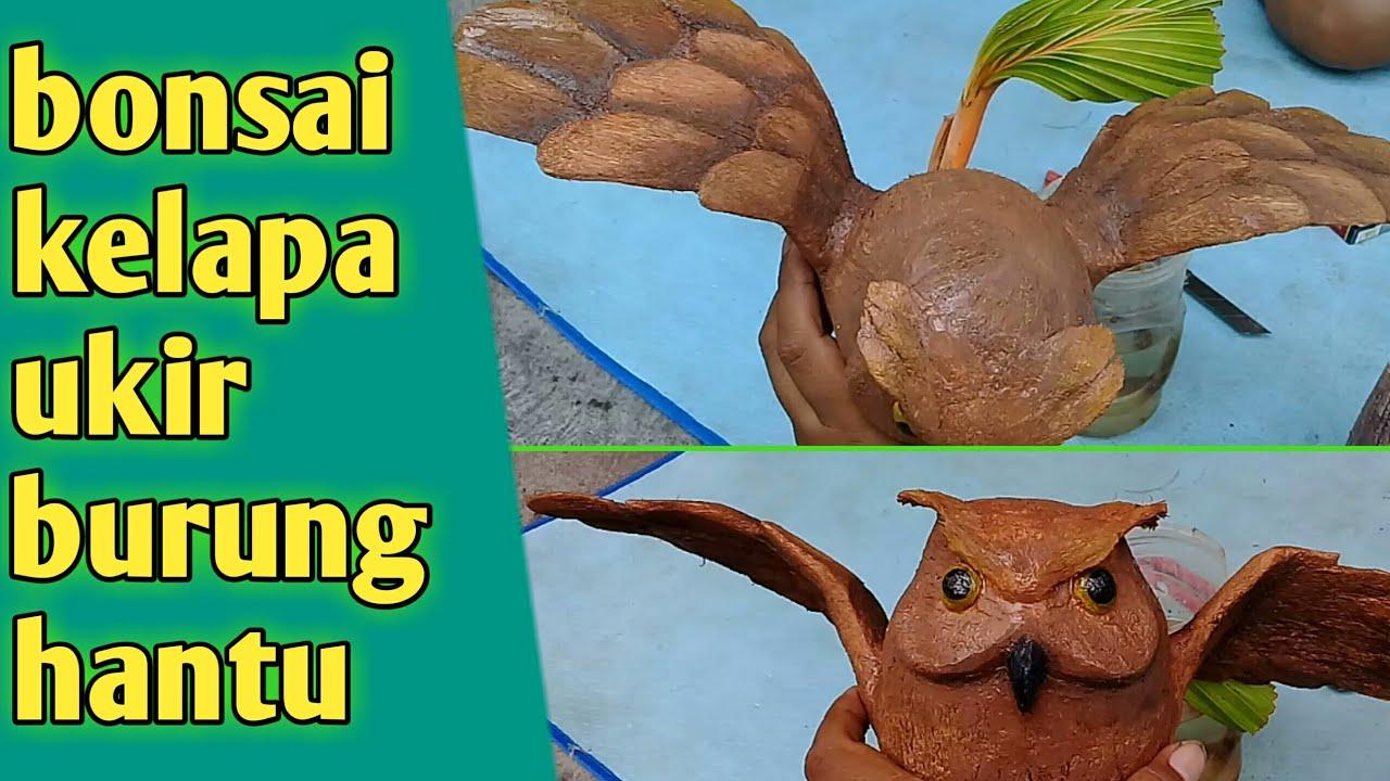 Bonsai Kelapa Burung Hantu Owl Coconut Bonsai Youtube