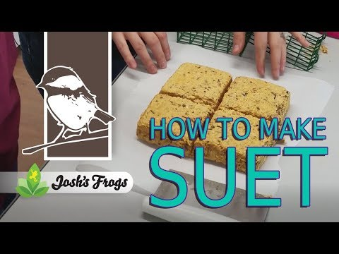 How To Make Suet: A Fat And Calcium Rich Bird Food