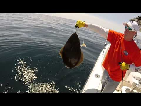 Great Offshore Ground Fishing  Maine 06-07-2015 Halibut Cod Wolffish...