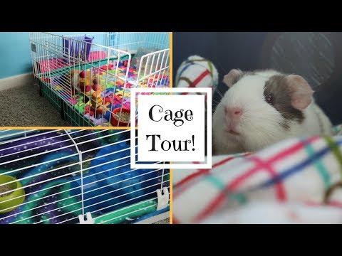 GUINEA PIG CAGE TOUR