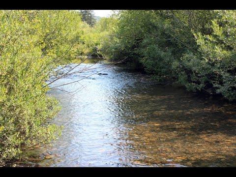 Challis Gold 20 Acre Placer Mining Claim on Conant Creek Idaho