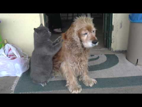 Cat massages dog - Youtube