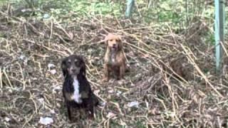 Janet Ardley   Cumbria Dog Training