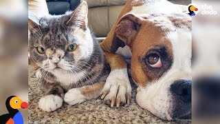 Dog Falls In Love With Very Special Cat - WILLOW & ELLA | The Dodo