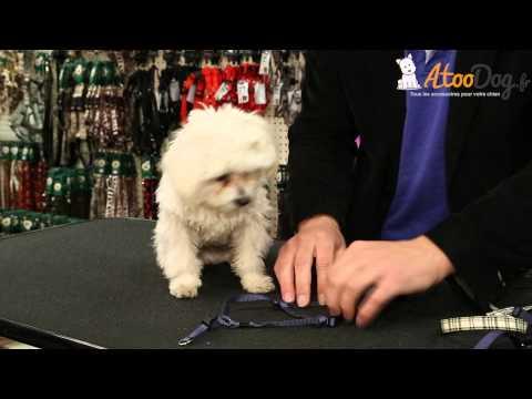 Les harnais pour chien - AtooDog