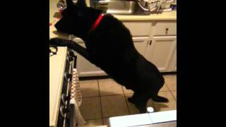 Counter Surfing Dog - No more!