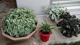 7 Plantinhas de Cultivar em Vasos Na Sombra