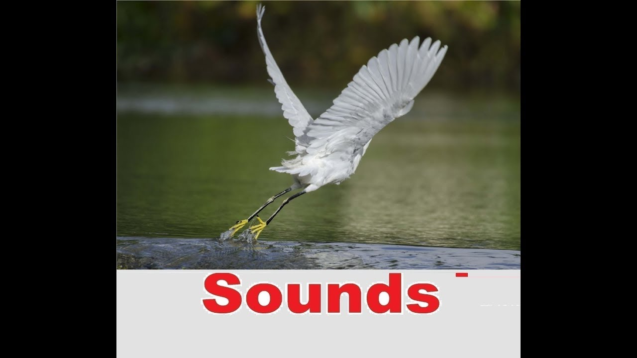 Wing Flap Sound Effects All Sounds