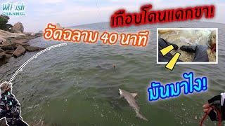 ตกปลาทะเลแนวชายฝั่ง โดน ปลาฉลามหัวบาตร อัดร่วมชั่วโมง เกือบโดนกัดขา!