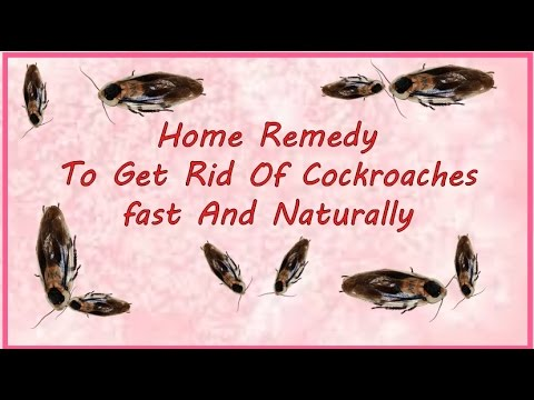 How To Remove Cockroach From Home Naturally