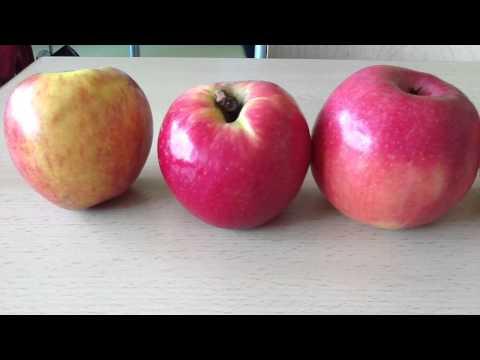 Wie groß ist ein durchschnittlicher Apfel?