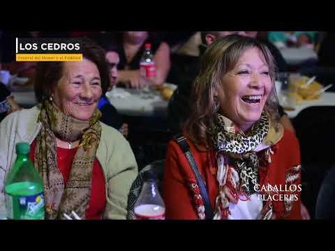Festival del humor (Los Cedros)