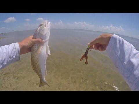 Redfish Caught on Rage Craws!