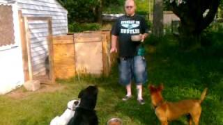 How To Feed Your Dog: Feeding A Pack Calmly, Food Aggression : Greenville Dog Whisperer