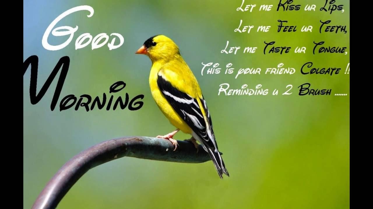 Funny Good Morning Ecards Greetings Funny Morning Greetings
