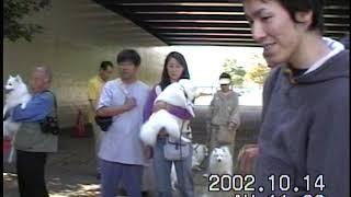 2002 10 14 日本スピッツ協会 お散歩会 お手入れ講習 日頃のお手入れや...