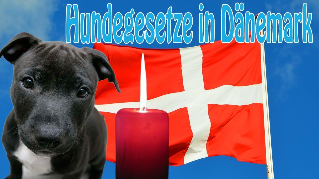 Dänemark Hundegesetz