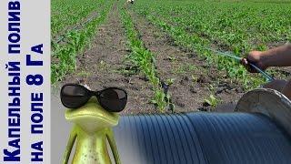 видео Способы полива кукурузы