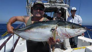 Dreamer Sportfishing - Aug 23 2015 - Overnight 6 Pack Catalina Island - Yellowtail Slaughter El Nino