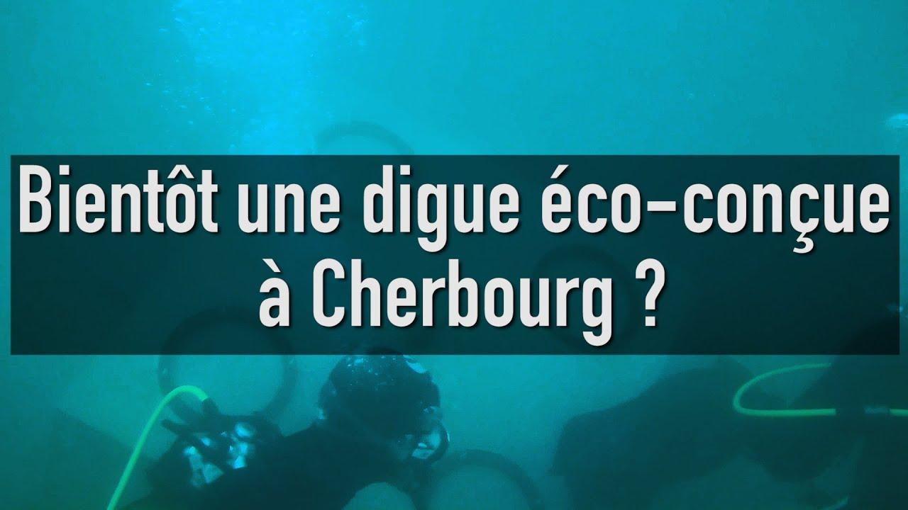 Biodiversité Marine : Bientôt une digue éco conçue à Cherbourg ?