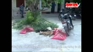► Quyết liệt truy bắt đối tượng trộm chó manh động
