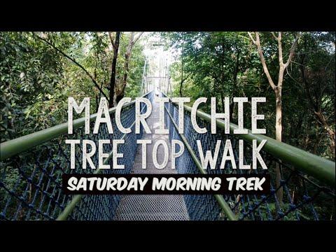 MacRitchie Tree Top Walk   16.01.16