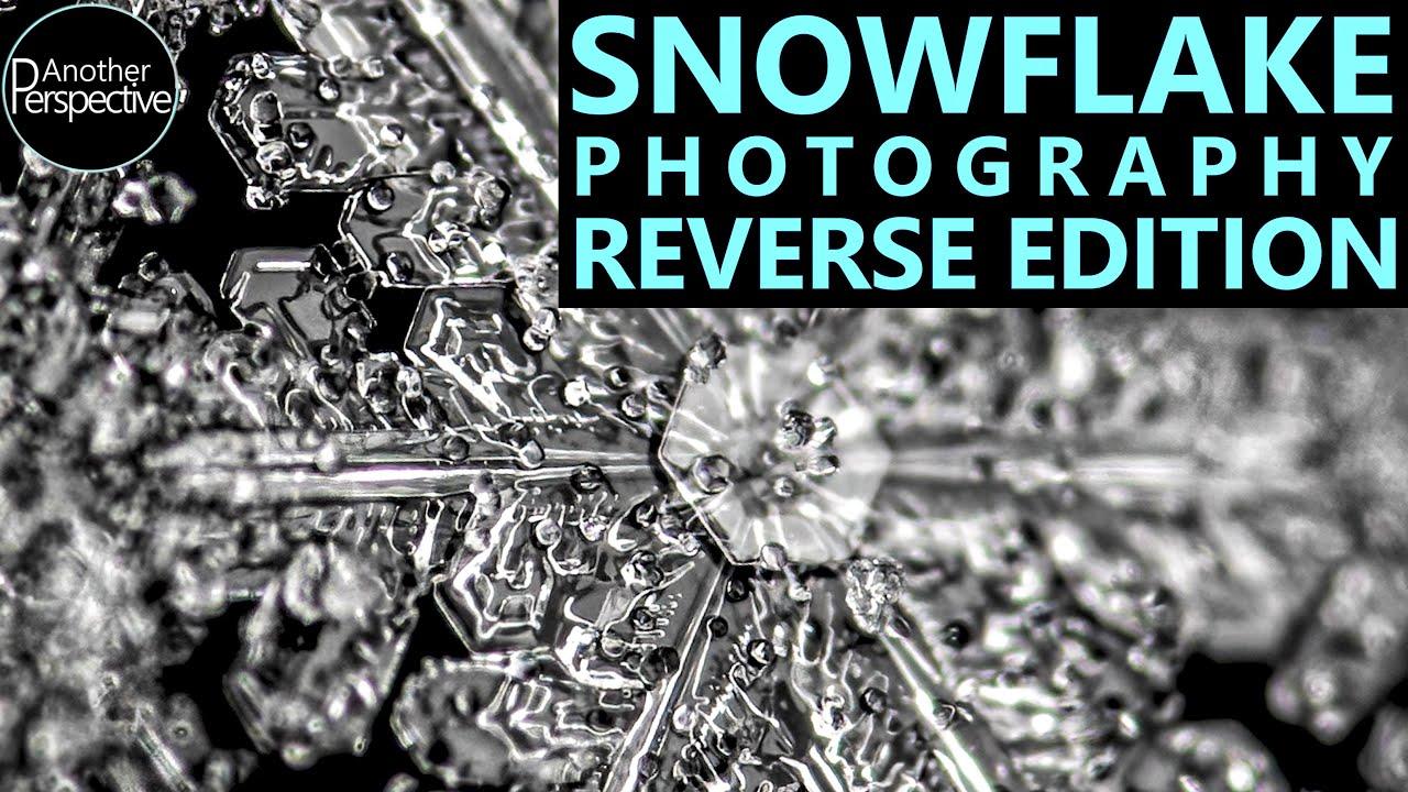 Melting Snowflake in Reverse