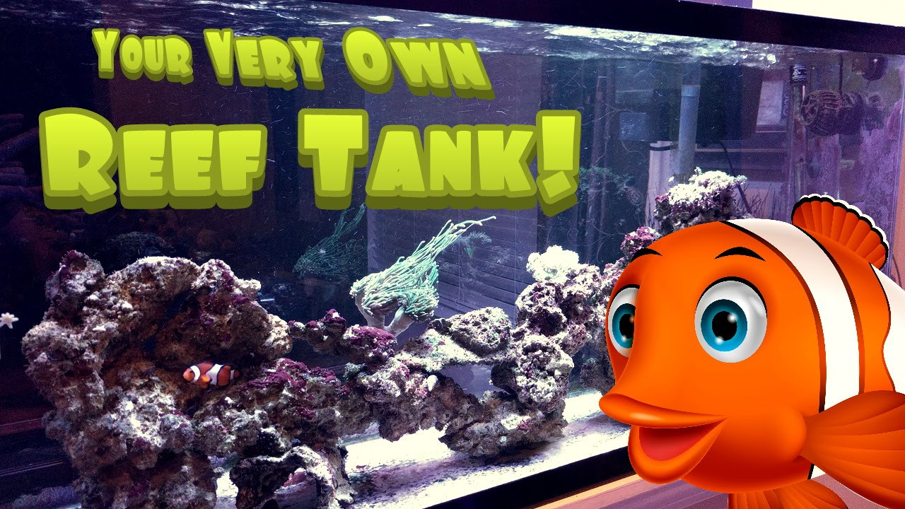 how to setup a simple easy and inexpensive reef saltwater aquarium tank 55g saltwater tank
