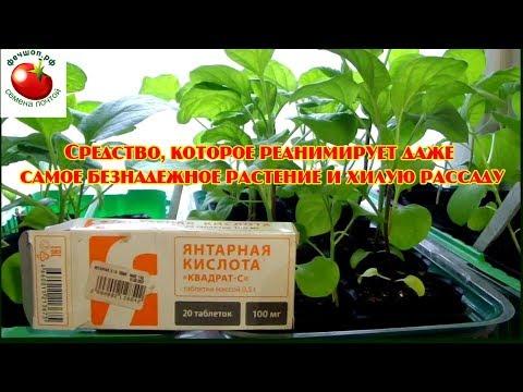 Средство которое реанимирует даже самое безнадежное растение и хилую рассаду!