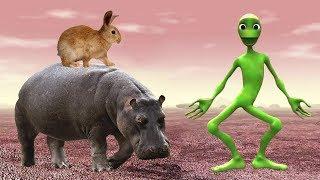 учить животных для малышей |  Звуки Животных дикие | обучающие видео для детей | часть 1