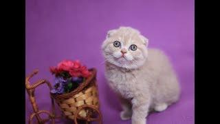 Котятам 3 недели питание/Как правильно кормить котят/Первый прикорм