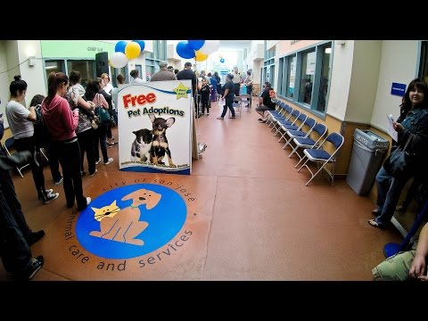 San Jose Animal Care Center - Maddie's Pet Adoption Days 2015