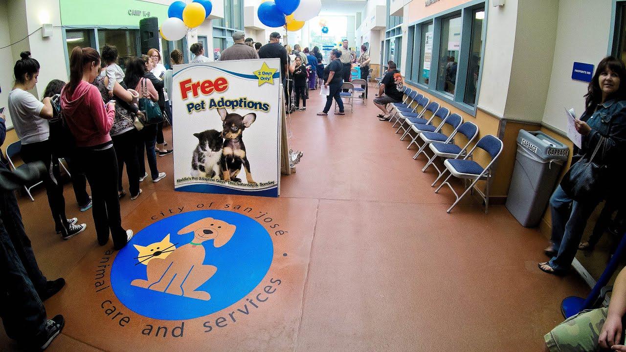 San Jose Animal Care Center Maddies Pet Adoption Days 2015 Youtube