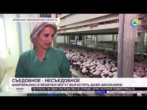 В Армении популярен грибной бизнес