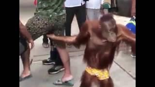плохая обезьяна