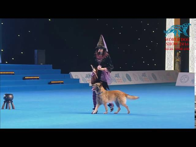 FCI Dog dance World Championship 2016 –Heelwork to music final - Lusy Imbergerova and Deril (Italy)