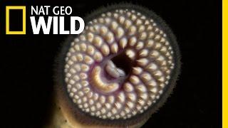 Paddlefish Parasites | Wild Mississippi