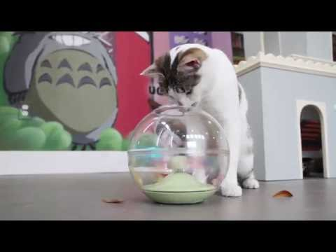 petlinks®-electronic-cat-toys