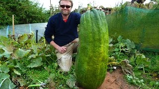 Allotment Diary : Weighing this years Giant Marrow